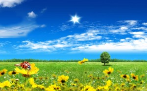 Green_summer_meadow